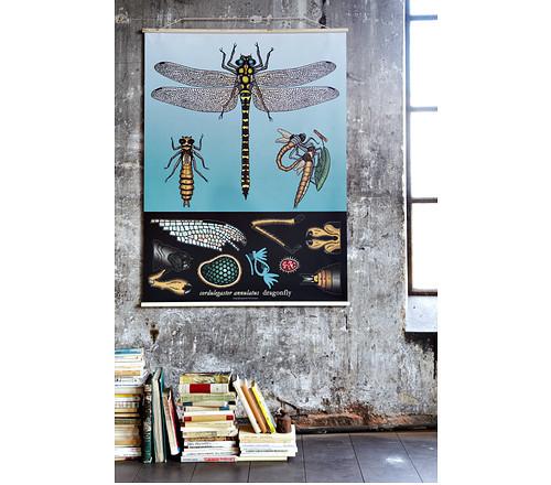 insectos-lamina-1