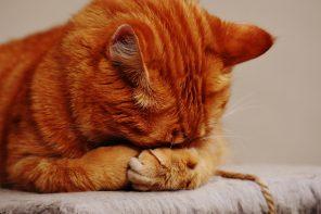 Unha lista de reprodución pensada para a felicidade do teu gato