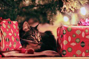 Libros para todos ou un gato vingador: as tradicións do Nadal en Islandia
